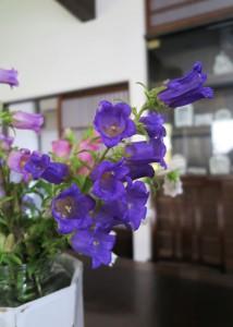 農協の花2