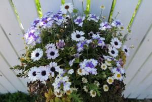 花の寄せ植え 青系