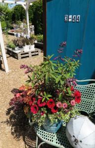 花の寄せ植え