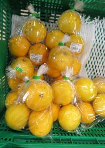ニューサマーオレンジ (2)