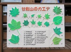 楓の葉の看板
