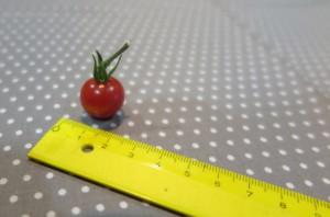 マイクロミニトマト2