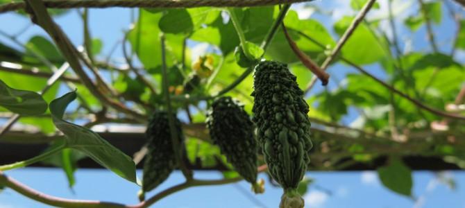 我が家の沖縄の植物たちをご紹介します
